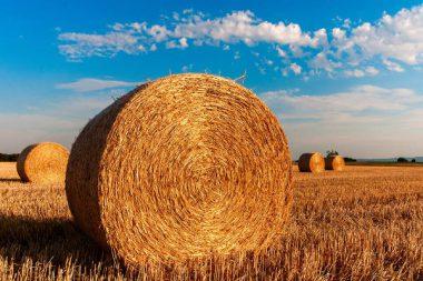 Besteuerung Durchschnittssatz Landwirtschaft