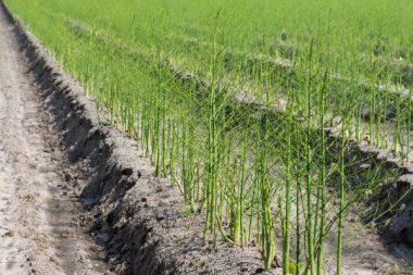 Saisonarbeit Landwirtschaft
