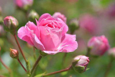 Garten- und Landschaftsbau Umsatzsteuer